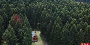 森林空中小屋Cottage In Forest Aerial  741022