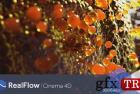 C4D插件 NextLimit RealFlow C4D 2.0.0.0037 Win